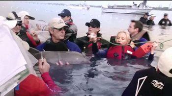 SeaWorld TV Spot, 'Desde nuestro parque hasta el planeta' [Spanish] - Thumbnail 3