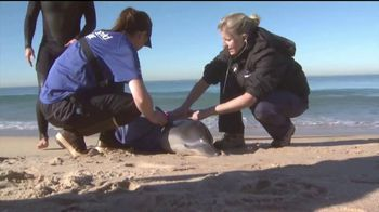 SeaWorld TV Spot, 'Desde nuestro parque hasta el planeta' [Spanish] - Thumbnail 4