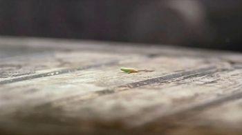 Heinz Ketchup TV Spot, 'Sprout' Song by Glenn Miller - Thumbnail 1