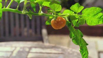 Heinz Ketchup TV Spot, 'Sprout' Song by Glenn Miller - Thumbnail 4