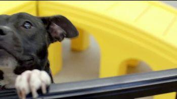 VIP Pet Care TV Spot, 'Walk-Ins Welcome' - Thumbnail 6