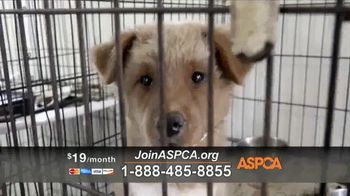 ASPCA TV Spot, 'Dark and Distressing' - Thumbnail 9