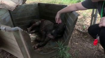 ASPCA TV Spot, 'Dark and Distressing' - Thumbnail 1