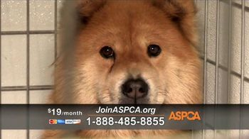 ASPCA TV Spot, 'Dark and Distressing' - Thumbnail 3