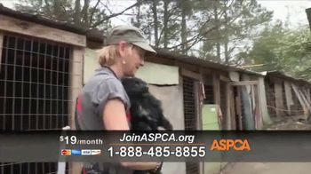 ASPCA TV Spot, 'Dark and Distressing' - Thumbnail 8