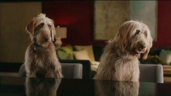 Rover.com TV Spot, 'Dog People: Clear the Shelters'