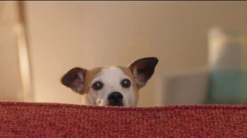 Rover.com TV Spot, 'Dog People: Clear the Shelters' - Thumbnail 2