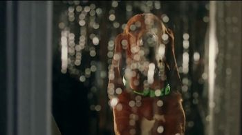 Rover.com TV Spot, 'Dog People: Clear the Shelters' - Thumbnail 3