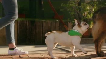 Rover.com TV Spot, 'Dog People: Clear the Shelters' - Thumbnail 4