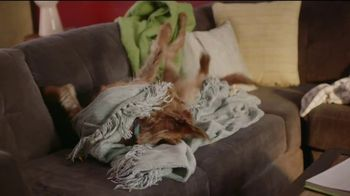 Rover.com TV Spot, 'Dog People: Clear the Shelters' - Thumbnail 5
