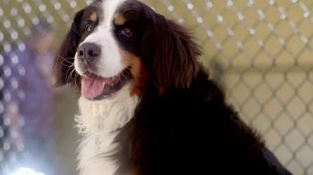 VIP Pet Care TV Spot, 'Clear the Shelters'