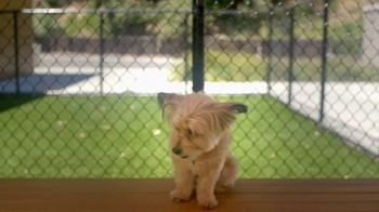 VIP Pet Care TV Spot, 'Clear the Shelters' - Thumbnail 7