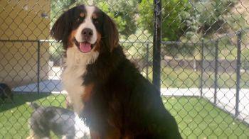 VIP Pet Care TV Spot, 'Clear the Shelters' - Thumbnail 8