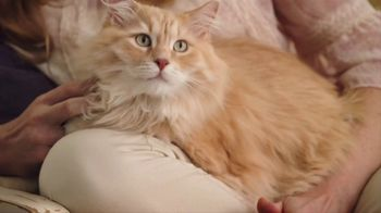 Blue Buffalo Indoor Health Cat Food TV Spot, 'Cassie' - Thumbnail 7