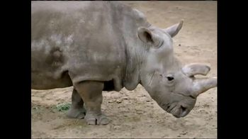 San Diego Zoo Global Wildlife Conservancy TV Spot, 'Northern White Rhino' - Thumbnail 2