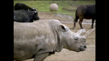 San Diego Zoo Global Wildlife Conservancy TV Spot, 'Northern White Rhino'