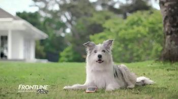 Frontline Plus TV Spot, 'For Dogs and Cats' - Thumbnail 1