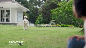 Frontline Plus TV Spot, 'For Dogs and Cats' - Thumbnail 8