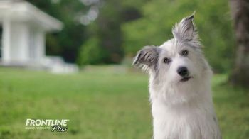 Frontline Plus TV Spot, 'For Dogs and Cats' - Thumbnail 9