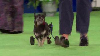 Hallmark Movies Now TV Spot, '2018 American Rescue Dog Show' - Thumbnail 2