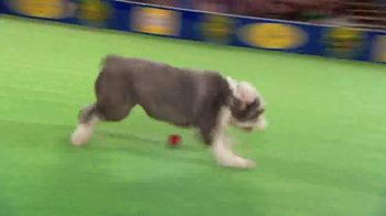 Hallmark Movies Now TV Spot, '2018 American Rescue Dog Show' - Thumbnail 5