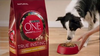Purina ONE SmartBlend True Instinct TV Spot, 'Evolved' - Thumbnail 7