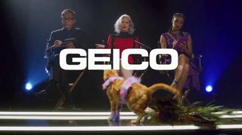 GEICO TV Spot, 'Lifetime: Cats on the Catwalk' - 39 commercial airings
