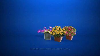 Lowe's TV Spot, 'Gardening Gene: Pint Annuals' - Thumbnail 8
