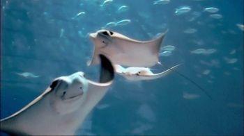 SeaWorld TV Spot, 'Summer 2018: Experience Real' - Thumbnail 1
