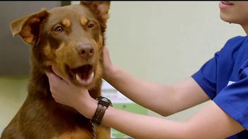 VIP Pet Care TV Spot, 'Look for us on NBC and Telemundo' [Spanish] - Thumbnail 8