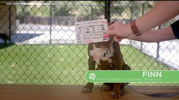 VIP Pet Care TV Spot, '2017 Clear the Shelters Adoption Event' [Spanish] - Thumbnail 1