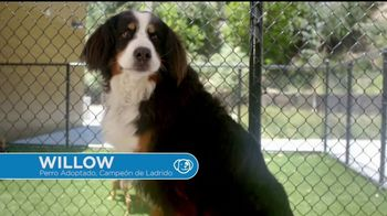 VIP Pet Care TV Spot, '2017 Clear the Shelters Adoption Event' [Spanish]