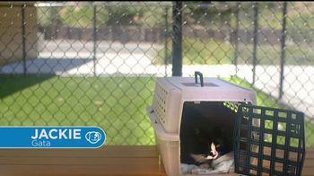 VIP Pet Care TV Spot, '2017 Clear the Shelters Adoption Event' [Spanish] - Thumbnail 5