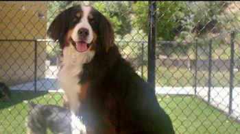 VIP Pet Care TV Spot, '2017 Clear the Shelters Adoption Event' [Spanish] - Thumbnail 7