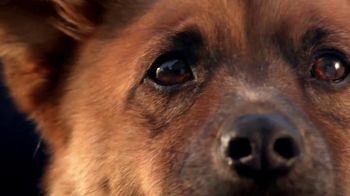 Blue Buffalo TV Spot, 'Pet Cancer Awareness 2017' - Thumbnail 1
