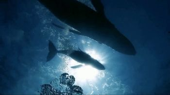 Mission Blue TV Spot, 'Fight for Healthy Oceans' - Thumbnail 3