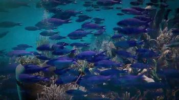 Mission Blue TV Spot, 'Fight for Healthy Oceans' - Thumbnail 4