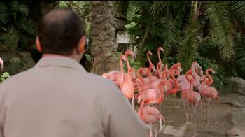 Popeyes $5 Butterfly Shrimp Tackle Box TV Spot, 'Los flamencos' [Spanish] - Thumbnail 3