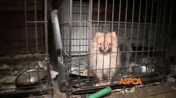 ASPCA TV Spot, 'Carly's Life' - Thumbnail 4
