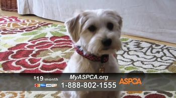 ASPCA TV Spot, 'Carly's Life' - Thumbnail 8