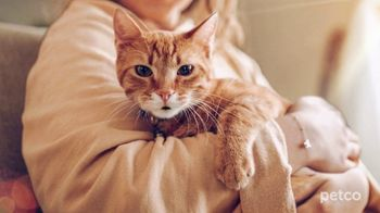 PETCO TV Spot, 'Cat Specialists' - Thumbnail 4