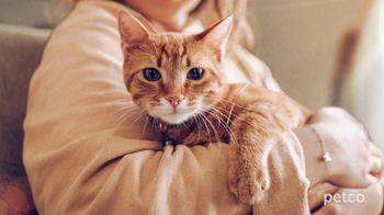 PETCO TV Spot, 'Cat Specialists' - Thumbnail 7