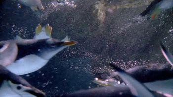 SeaWorld San Diego TV Spot, 'Real and Amazing' - Thumbnail 1