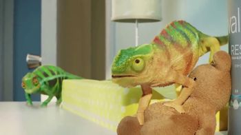 Valspar TV Spot, 'Chameleons: It's Time' - Thumbnail 5