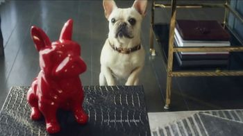 HomeGoods TV Spot, 'Frenchie Find'