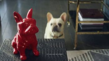 HomeGoods TV Spot, 'Frenchie Find' - Thumbnail 6