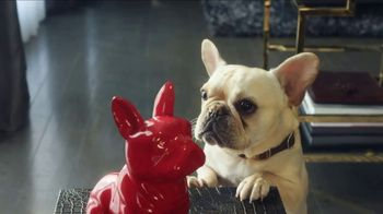 HomeGoods TV Spot, 'Frenchie Find' - Thumbnail 8