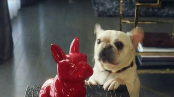 HomeGoods TV Spot, 'Frenchie Find' - Thumbnail 9