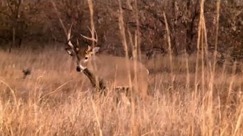 Wildlife Research Center Special Golden Estrus TV Spot, 'Gold Standard' - Thumbnail 4