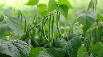 Del Monte Fresh Cut Green Beans TV Spot, 'Keep It Simple' - Thumbnail 2